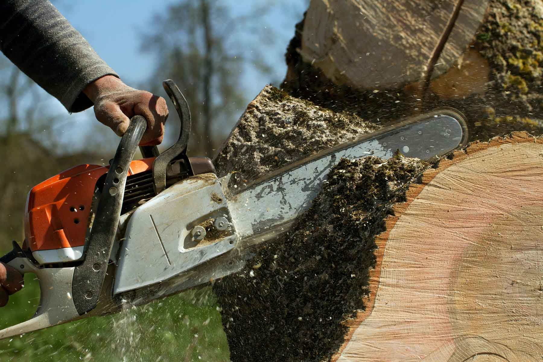 Stump Grinding + Removal